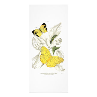 Vintage Yellow Butterflies Insects Rack Cards
