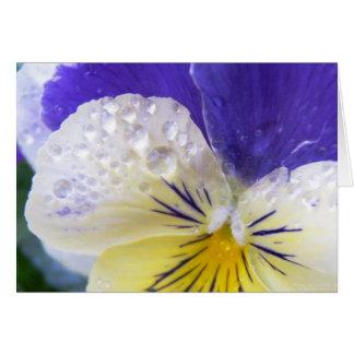 Viola Flowers Greeting Card