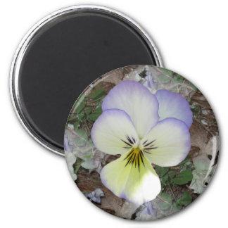 Viola Pansy ~ Lavender Cream 2 Magnet