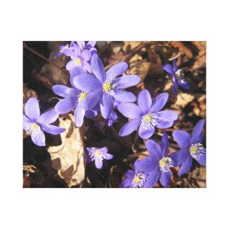Violet Blossoms Stretched Canvas Prints