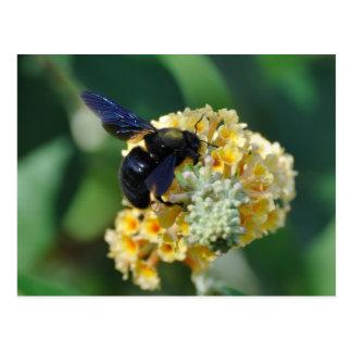Violet carpenter bee postcard