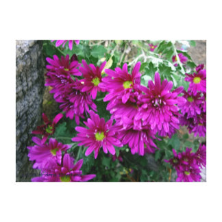 VIOLET CHRYSANTHEMUMS CANVAS PRINT