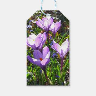 Violet crocuses 02.0, spring greetings