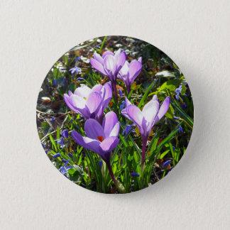 Violet crocuses 02.0, spring greetings 6 cm round badge