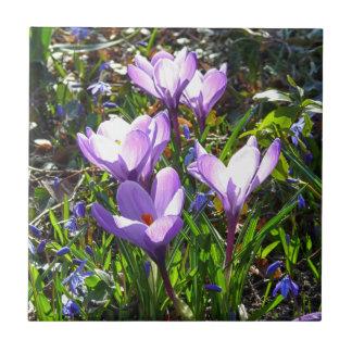 Violet crocuses 02.0, spring greetings ceramic tile