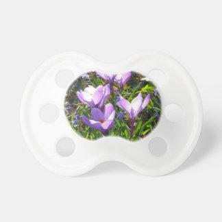 Violet crocuses 02.0, spring greetings dummy