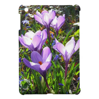 Violet crocuses 02.0, spring greetings iPad mini cover