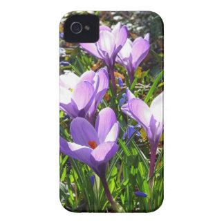 Violet crocuses 02.0, spring greetings iPhone 4 cover