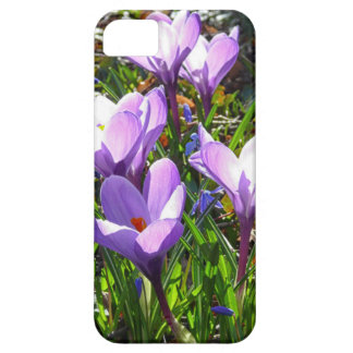 Violet crocuses 02.0, spring greetings iPhone 5 case
