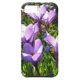 Violet crocuses 02.0, spring greetings iPhone 5 cases