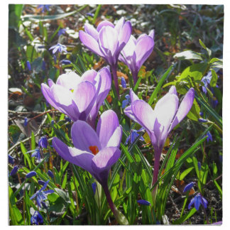 Violet crocuses 02.0, spring greetings napkin