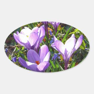 Violet crocuses 02.0, spring greetings oval sticker