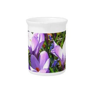 Violet crocuses 02.0, spring greetings pitcher
