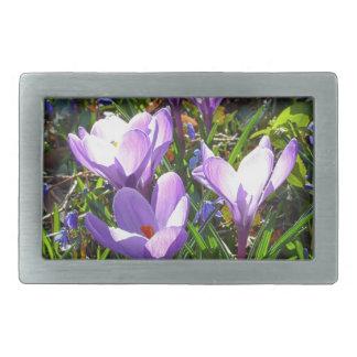 Violet crocuses 02.0, spring greetings rectangular belt buckles