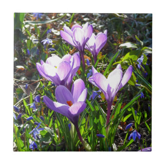 Violet crocuses 02.0, spring greetings small square tile