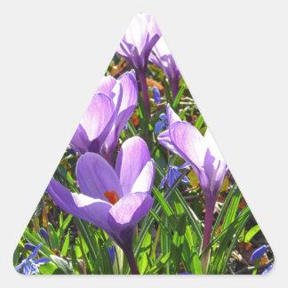 Violet crocuses 02.0, spring greetings triangle sticker