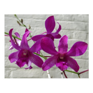 Violet Exotic Orchid Flowers Postcard
