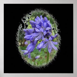 Violet flower posters