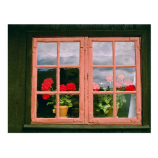 Violet Geraniums In The Window Of A Traditional Ho Postcard