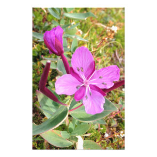 violet in alaska stationery