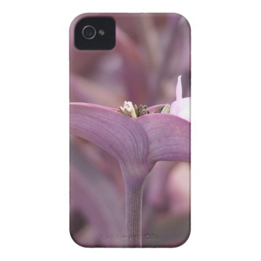 Violet Mexican Three Master Flower iPhone 4 Case