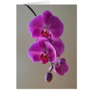 Violet Phalaenopsis Orchid Card