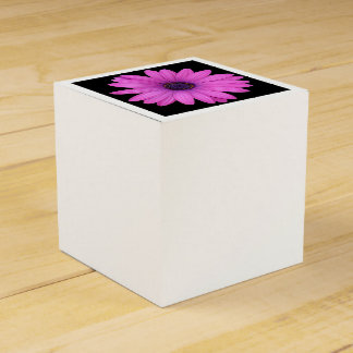 Violet Pink Osteospermum Flower Isolated on Black Favour Box