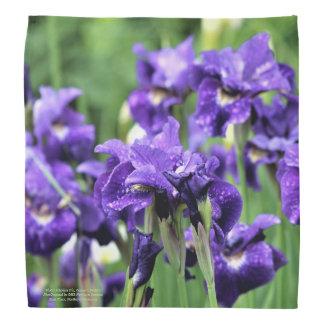 Violet Siberian Iris, Ceasar's Brother Bandana