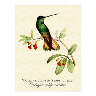 Violet Throated Hummingbird Vintage Art Postcard