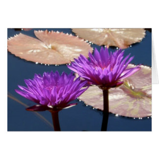 Violet Water Lilies Greeting Card