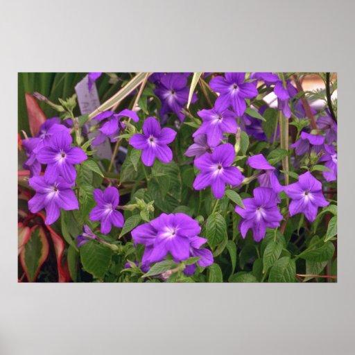Violet Weeds Posters