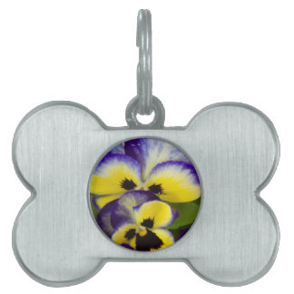 violet wet from the rain in the garden pet name tag