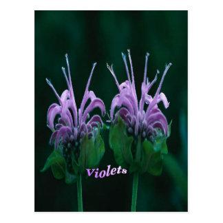 violets post card