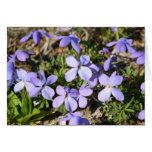 violets stationery note card
