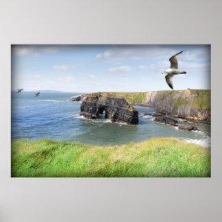 Virgin rock gulls in an updraught poster