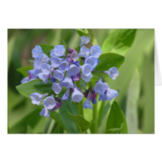 Virginia bluebell (Mertensia virginica) card