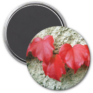 Virginia Creeper Leaves Large Round Magnet