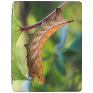 Virginia Creeper Sphinx Caterpillar iPad Cover