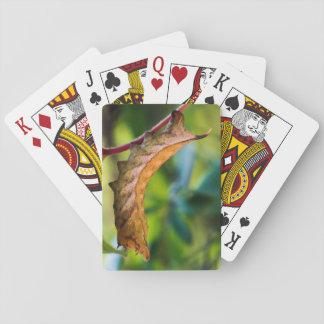 Virginia Creeper Sphinx Caterpillar Playing Cards