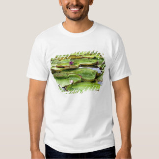 Vitoria Regis, giant water lilies in the Amazon Tees