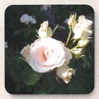 Vivaldi Hybrid Tea Rose Coaster