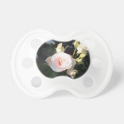 Vivaldi Hybrid Tea Rose Pacifier