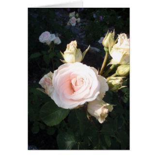 Vivaldi Hybrid Tea Rose Greeting Card