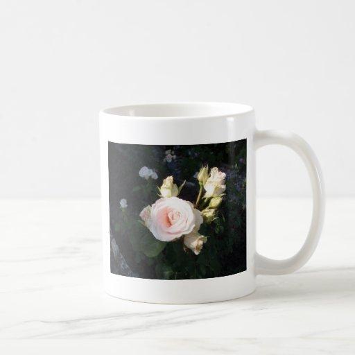 Vivaldi Hybrid Tea Rose Coffee Mugs