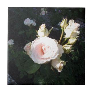 Vivaldi Hybrid Tea Rose Small Square Tile