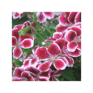 Vivid Dark Pink Dianthus Canvas Print