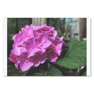 Vivid Pink Hydrangea Tissue Paper