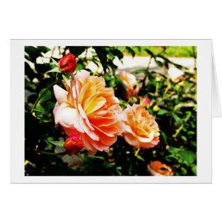 Vivid Roses Note Card