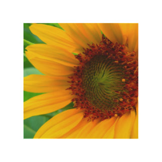 Vivid sunflower wood wall art