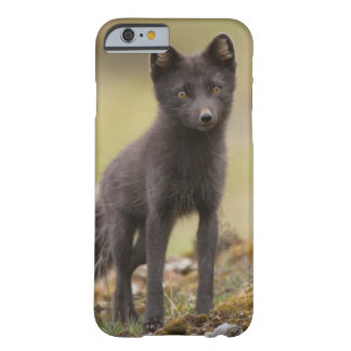 Vixen searches for food barely there iPhone 6 case